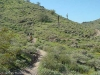 Javelina Trail, South Mountain