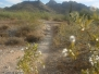 Trail 100 - Phoenix Mountain Preserve