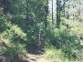 Trail 307 - Prescott, AZ