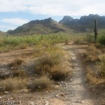 Phoenix Mountain Preserve Trail Reviews