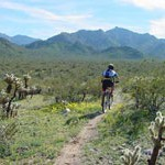 Estrella Mountain Regional Park Trail Reviews
